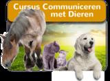Online Cursus Communiceren met Dieren_
