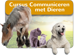 Online Cursus Communiceren met Dieren