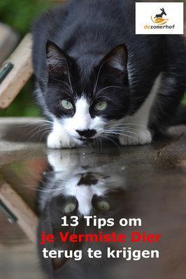 Gratis e-book 13 tips bij Diervermissingen