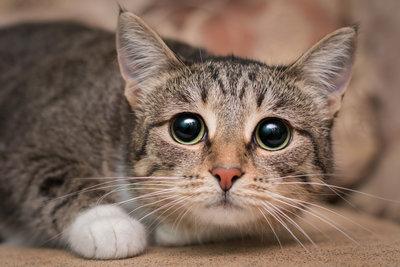 Kat Bang voor Vuurwerk, de stofzuiger, onbekende mensen