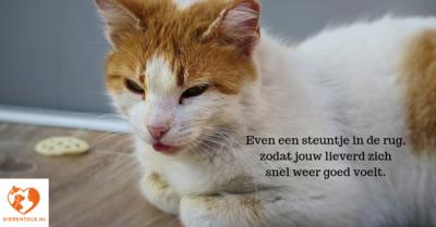 Bange kat - geurloze druppels voor over het voer óf om mee te aaien